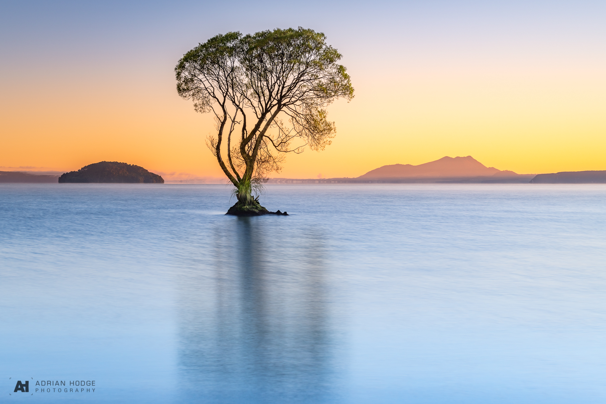 The morning glow of sunlight captures the edge of a lone tree growing from Lake Taupo