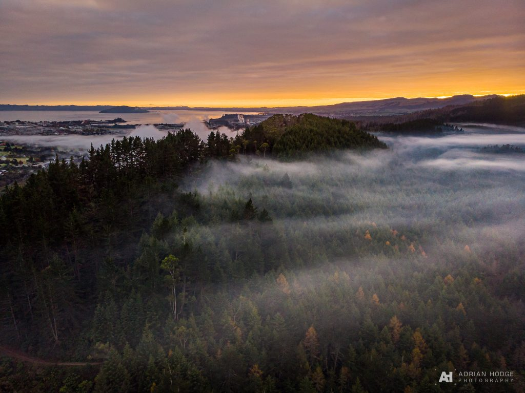 Redwood Sunrise Fog